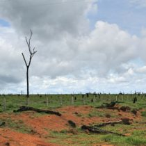 Brasilien: Der Fluch des Sojas